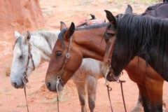 Three horses at Monument Valley Stock Photo