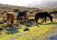 Three horses in the nature Royalty Free Stock Photos