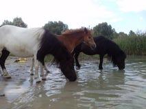 Three horses. Near water royalty free stock photos