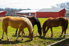 Three horses in pasture Royalty Free Stock Photos