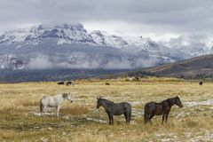 Three horses in Wyoming ranch pasture royalty free stock images
