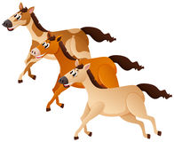 Three horses running in group Stock Images