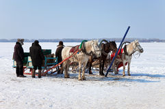 Three horses with sleds Royalty Free Stock Photography