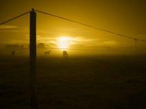 Three horses in the Sunrise_toned Stock Photo