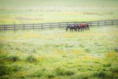 Three Horses Royalty Free Stock Photo