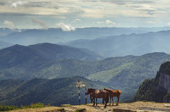 Three horses on top of a mountain. Near some signs and many hills and mountains in the background royalty free stock images