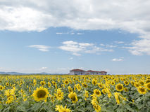 Three houses on a field of sunflowers Stock Photography