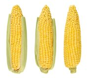 Three husked cobs of sweet corn, isolated, over white Royalty Free Stock Photo