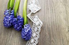Three hyacinth Stock Photos