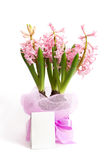Three hyacinth plants with note Royalty Free Stock Image