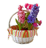Three hyacinths in a white basket Royalty Free Stock Photography