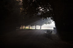 Three illuminated benches in the fog. Three park benches illuminated by a central lamp with many rays royalty free stock photography