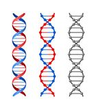 DNA. Three illustration of DNA helix Royalty Free Stock Photography