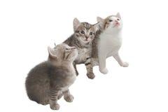Three imaginary kitten Royalty Free Stock Image