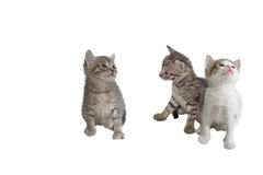 Three imaginary kitten Stock Photography