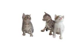 Three imaginary kitten Stock Photography