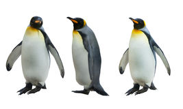 Three imperial penguins Stock Image