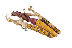 Three indian corn alpha. Three Indian corn ears isolated over white royalty free stock images
