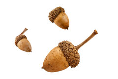 Three Isolated Acorns Royalty Free Stock Images