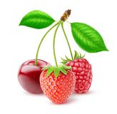 Three isolated berries royalty free stock image