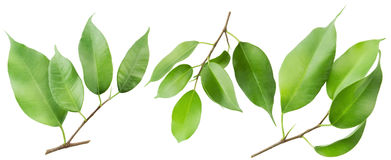 Three isolated branches Stock Photography