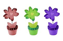 Three isolated flowers with different colors