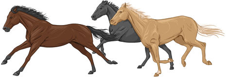 Three isolated galloping horses Royalty Free Stock Images