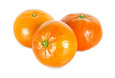 Three isolated tangerine Stock Image