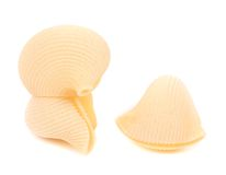 Three Italian pasta shells Royalty Free Stock Photography