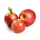 Three Jonagold Apples Royalty Free Stock Photography