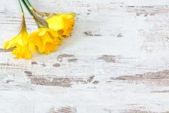 Three jonquils. Three yellow jonquils on bright rustic wooden background stock image