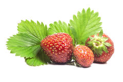 Three juicy ripe strawberries from the garden with green leaves Stock Photo