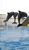 Three jumping dolfins Stock Images