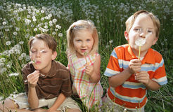 Three Kids. Three Caucasian children sitting in a dandelion field blowing on dandelions Royalty Free Stock Photos