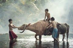 Three kids and buffalo Royalty Free Stock Photos