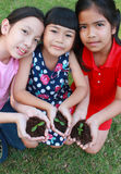 Three kids with hands holding sapling in soil surface. Stock Image