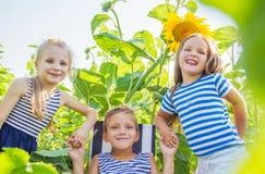 Three kids having fun among sunflowers royalty free stock photo