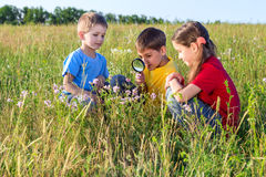 Three kids looking to flower with a magnifyer Royalty Free Stock Images
