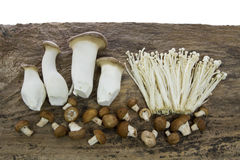 Three Kind Mushroom Royalty Free Stock Images