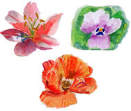 Three kind of watercolor flowers painting Stock Images