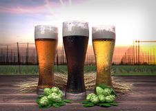 Three kinds of beer, barley, hops with hop-garden background - 3D render Stock Photos