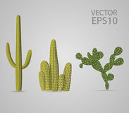 Three kinds of green cactus set Royalty Free Stock Photography