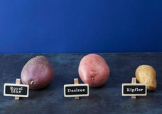 Three kinds of potatoes on blue. Three kinds of potatoes with blue background and copy space Stock Photo