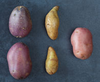 Three kinds of potatoes. On dark textured surface. Top view Royalty Free Stock Photography