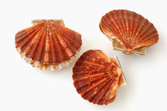 Three king scallops, saint jacques on white background Royalty Free Stock Photography