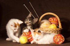 Three kitten Stock Photography
