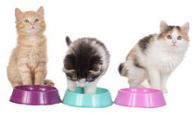 Three kitten with food bowls Stock Images