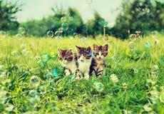 Three kitten outdoor Royalty Free Stock Image