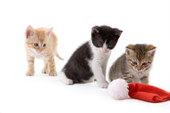 Three kitten and a santa hat Royalty Free Stock Photo