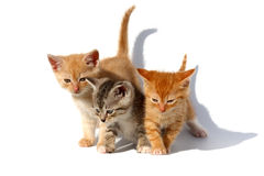 Three kittens. Three kittens are on a white background Stock Photography
